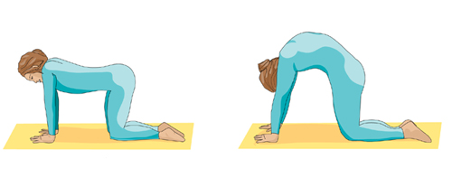 Illustration: Picture of the cat pose
